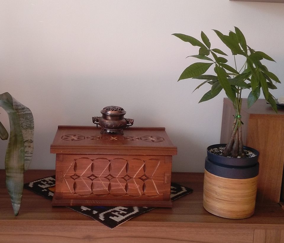 cutie crestata lemn brad